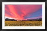 Framed Spring Sunset Napa Valley