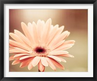 Framed Peachy Keen