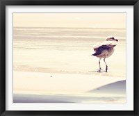 Framed Bird at The Beach