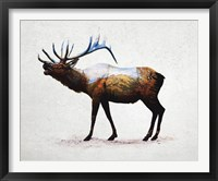 Framed Rocky Mountain Elk