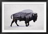 Framed American Bison