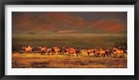 Framed Montana Dreaming