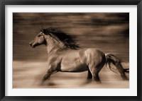 Framed Wind Runner