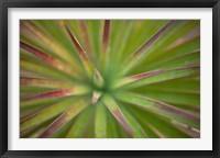 Framed Arizona Monocot