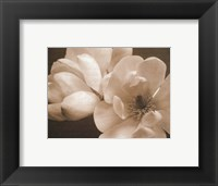 Framed Winter Magnolia I