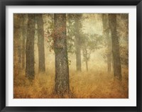 Framed Oak Grove in Fog