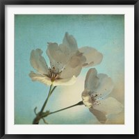 Framed Spring Sings