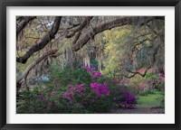 Framed Oaks and Azaleas