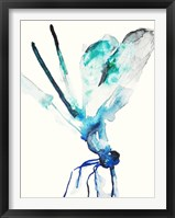 Framed Blue & Green Dragonfly
