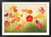 Framed Sunlit Poppies