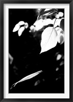 Framed Simplicity