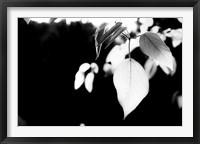 Framed White Leaves