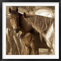 Framed Horses Amour