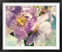 Framed Seaborn 38