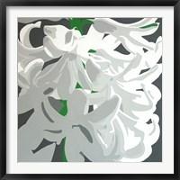 Framed White Hyacinth
