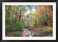 Framed Autumn at Hopkins Pond