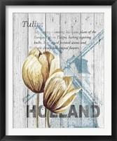 Framed Holland Tulips