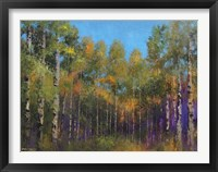 Framed Aspen Autumn