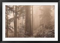 Framed Enchanted Forest II
