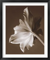 Framed Moonglow Tulip