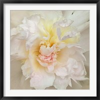 Framed Paeonia