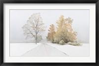 Framed Autumn Snowfall