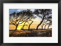 Framed Coastal Grove
