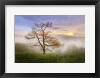 Framed Misty Mountain Tree
