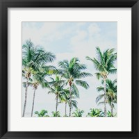 Framed Southern Palms