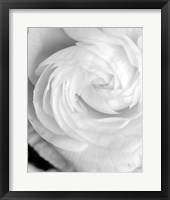 Framed Black and White Petals I