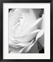 Framed Black and White Petals II