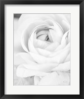 Framed Black and White Petals III