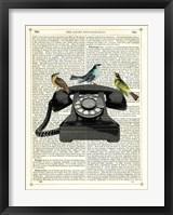 Framed Birdcall