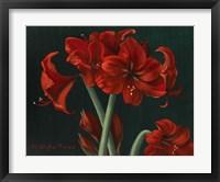 Framed Crimson Beauties