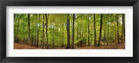 Framed Trees