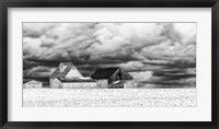 Framed Five White Barns