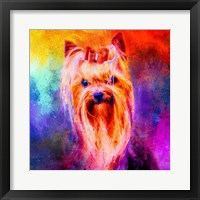 Framed Jazzy Yorkshire Terrier