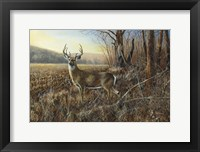 Framed Bluff Country Buck