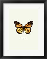 Framed Yellow Butterfly