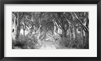 Framed Dark Hedges, Ireland (BW)