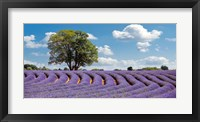 Framed Lavender Field in Provence, France