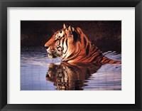 Framed Tiger Reflection