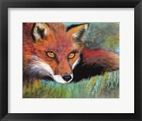 Framed Fox Prowl