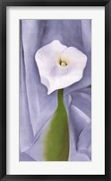 Framed Calla Lily on Grey