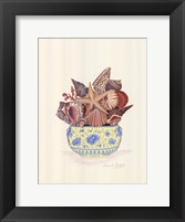 Seashell Collection III Framed Print