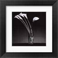 Framed Arums 1990