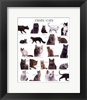 Framed Cats