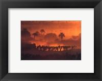 Framed luc Manaud - Oasis de Fachi, Niger