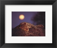 Framed Leopard with Rising Moon