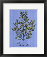 Framed Olive Tree